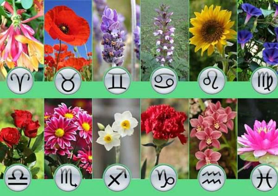 Растения по знаку зодиака для каждого